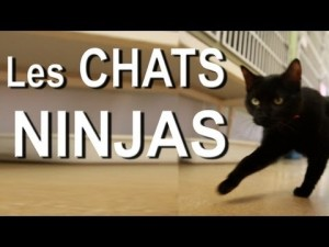 photos Les chats ninjas