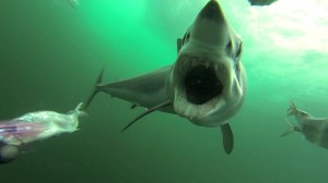 photos Attaque de requin à la GoPro