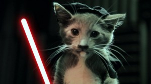photos Jedi Kittens Strike Back