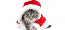animal-anime-of-a-cat-with-santa-claus-hat-211257